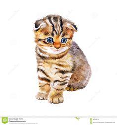 Watercolor Portrait Of British Scottish Fold Kitten With Odd Eyes ...