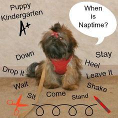 Here's a happy Puppy Kindergarten Graduate.  http://miracleshihtzu.com/puppy-kindergarten.html