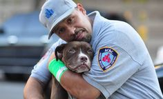 Ocasio, pit bull/bulldog mix was rescued by Animal Control Officer Brendon Ocasio. He found Ocasio tied to a pole on the top of a building just a few minutes shy of New York's September 16, 2010 tornado. She had a heavy chain around her neck and was left with no food, just a bowl of water which was out of her reach. No one in the building had seen her before and it was said that she was tied up for at least 3 days. Brendon had to use his heavy duty chain cutter to cut her loose. As soon as…
