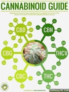 CANNABINOID GUIDE #hemp #hempoil #CBD #cbd #cbdoil #cannabinoid #cannabinoids #terpene #terpenes