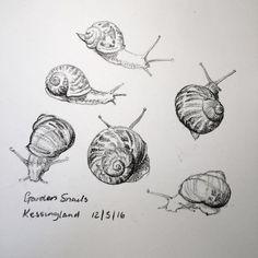 Snails sketch 133 Kate Batchelor Suffolk artist