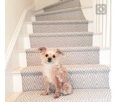 All white stairs - How to Choose a Runner Rug for a Stair Installation. A stair runner automatically elevates the look of almost any hallway! Check out our tips for choosing the best rug for your stairs Carpet Diy, Best Carpet, Grey Carpet, Carpet Ideas, Modern Carpet, Cheap Carpet, Carpet Decor, Carpet Types, Orange Carpet