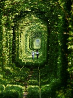 "A couple in "" Love Tunnel"" , Ukraine, from Iryna with love"