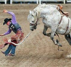 Dallas Cowboys Wreath, Rodeo Cowboys, Cowboy Artwork, Team Roper, Rodeo Life, Farm Boys, Vintage Horse, Horse Print, Horse Pictures