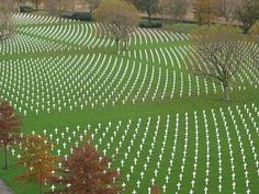 Flanders Field.  I cannot read about WW1 without breaking down. So awful.
