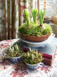 Spring bulbs & moss in antique blue & white. #antiques#vintage#spring#decor#home#interiors