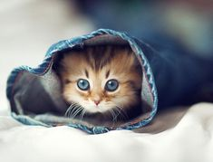 Sapete perché i gatti fanno le fusa? Questo comportamento ha un significato che spesso va al di là della felicità e della ricerca di attenzioni.