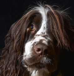 Credit: Philip Watts Dog Portrait winner: Philip Watts from Radstock, Somerset