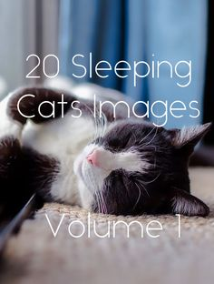 Cats sleep in the most unexpected places and in the strangest positions. These pictures will show you just how funny or weird their sleep positions can get.