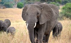 African Nations Propose Legal Ivory Trade