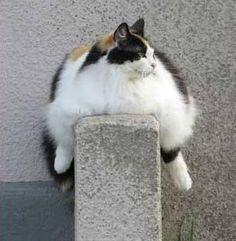 #cat #balans