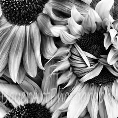 fine art sunflower images - Google Search