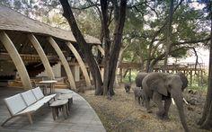 elephants walking past guest area at andbeyond sandibe inthe okavango delta Quebec, Banff National Park, National Parks, Animal Experiences, Elephant Walk, Okavango Delta, Tikal, Great Wall Of China, Walk Past