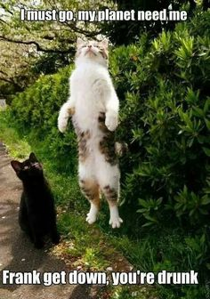 Animal humor What did we ever do without Pinster? My Dad would be hooked on the humor #cats