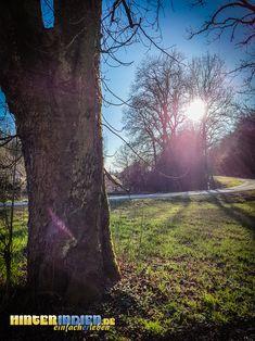 Nahe des alten Schlosses Wildenroth dringt vor allem in den Monaten Licht ins Dunkel, an denen es kein Laub an den Bäumen gibt. Plants, Light In The Dark, Tours, Hiking, Plant, Planting, Planets