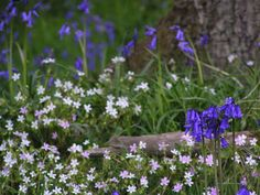 Woodland flowers - ideas for under the trees