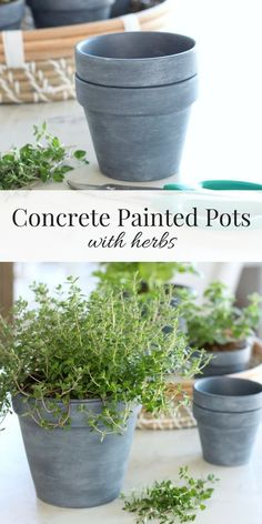 Learn how to create these concrete painted pots inspired by my friend Jamie's new book, French Vintage Decor. Perfect planters for an indoor herb garden! Outdoor Projects, Garden Projects, Diy Projects, Pot Plante, Painting Concrete, Herb Pots, Herbs Indoors, Painted Pots, Clay Pots