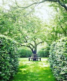 "349 Likes, 3 Comments - William Dangar (@williamdangar) on Instagram: ""The home and garden of Miranda Brooks #pinterest"""