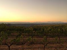Vinyes Montferri  #vinyes #vineyard #catalunya #catalonia #vi #wine #tardor #autumn #llum #light #landscape #paisatge #nature #natura #montferri #camptarragona #tarragona #tarragonaturisme #igers #igerstarragona #igerscatalunya