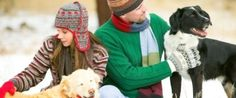 Which is More Important When You Get Older - A Pet or A Spouse - News - Bubblews