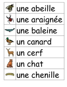 Les animaux - French vocabulary word wall cards French Language Lessons, French Lessons, Spanish Lessons, Spanish Language, French Teacher, Teaching French, Teaching Spanish, French Words, French Quotes