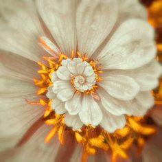 The beautiful hypnotic gifs by Feliks Konzakovski  Wiloo