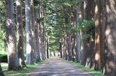 Pine Grove, Stockbridge MA