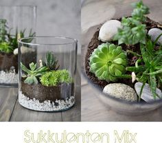 Succulent Terrarium - I want to make one for my desk at work!