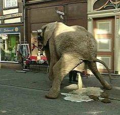 When You Gotta Go You Gotta Go - Elephant Sized Poop and Pee Bathroom Break  ---- best hilarious jokes funny pictures walmart humor fail