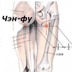 точка Чэн-фу, точка Чен-фу  боли в спине