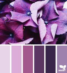 Farbpalette aus der Natur ! Malve (Farbpassnummer 22) Kerstin Tomancok / Farb-, Typ-, Stil & Imageberatung