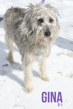 GINA....FOUND IN CANTON, OHIO.....Picked up as a stray on 3/12.  Available on 3/17.  $ 86.00 fee includes license, 4 way shot, Bordetella vaccine, flea treatment if necessary.  Some dogs are also wormed, Heartworm tested.  $50.00 goes to the cost of spay/neuter and rabies. We take...