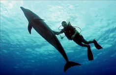 Scuba+Diving+with+Dolphins | Scuba Dive Best Places: Diving with Dolphins