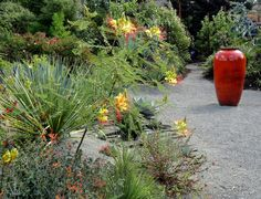 Kuzma garden, Portland OR - September 2014. Caesalpinias and container that perfectly picks up their hot red highlights.