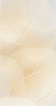 Hintergrund beige delicate textures and tone in tone colors Backgrounds Free, Aesthetic Backgrounds, Aesthetic Wallpapers, Nature Iphone Wallpaper, Beige Wallpaper, Instagram Background, Textures And Tones, Fabric Textures, Beige Aesthetic