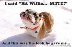 a perfect time to sit #BaggyBulldogs #englishbulldog #pets