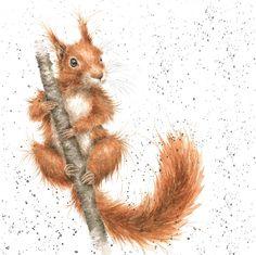 squirrel wrendale
