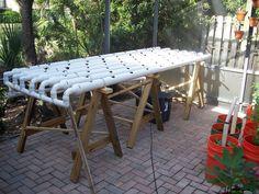 Home Hydroponic Setups