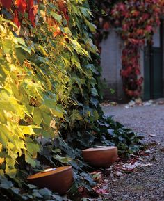 Gartenstrahler von Garpa Solar Licht, Outdoor Lighting, Lighting Ideas, Decoration, Garden Design, Pergola, Backyard, Plants, Modern Gardens