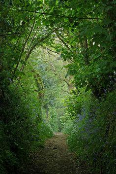 Path between Maenporth and Mawnan Smith, England