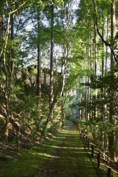 Kerry Hill Architects takes its cues from traditional Japanese architecture for Aman s new Kyoto opening Kerry Hill Architects, Garden On A Hill, Garden Path, Green Garden, Forest Bathing, Cedar Trees, Japanese Architecture, World Heritage Sites, Gardens