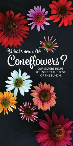 Our expert weeds through a ton of recent introductions to help you select the best of the bunch