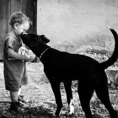 Dog giving a child a kiss. Labrador mix.