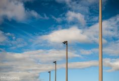 Light poles #minimalism #clouds #vertical #sky