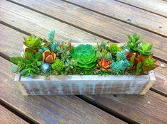 Sukkulenten bepflanzen rustikale Tischdeko Ideen