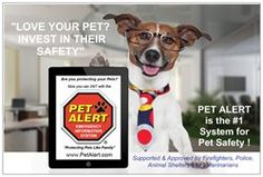 Invest in your pet's safety