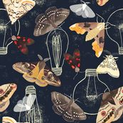 Enter your designs or view winning designs from the Spoonflower Moths challenge. Check back regularly for new design challenges and prizes.