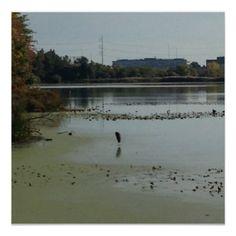 Bird in the Water at John Heinz Park