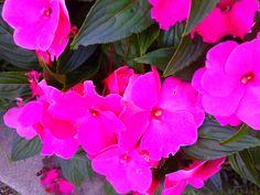Flowers purple.
