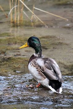 by Boon Chin, via Flickr                                                                                                                                                                                 More